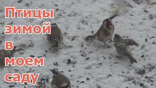 Зимующие птицы Москвы и Подмосковья