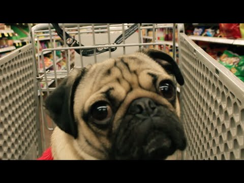 Doug the Pug - All I Want For Christmas Is Food [Parody]