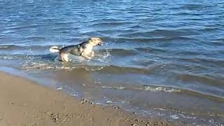 СОБАКА БЫВАЕТ КУСАЧЕЙ ТОЛЬКО ОТ ЖИЗНИ СОБАЧЬЕЙ Собака На Рыбалке