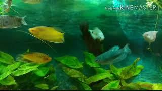 Мой аквариум и кот Батон (Батоша)