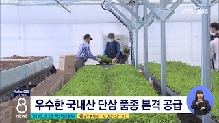 [JTV 8 뉴스] '단삼' 9만 그루 보급...국산 약용작물 확대