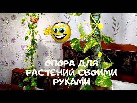 Опора для комнатных вьющихся растений своими руками бюджетная  мой вариант 1