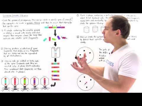 Building and Screening Genomic Libraries
