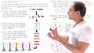 Aufbau und Screening von Genomischen Bibliotheken