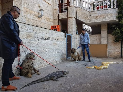 التمساح و الضبع و الافعى و الكلب بيل مع جمال العمواسي
