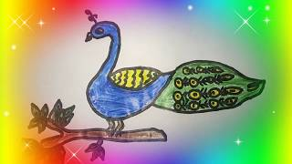 Peacock Drawing Easy and Simple with Colors
