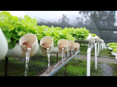 aquaponic farming you need to see