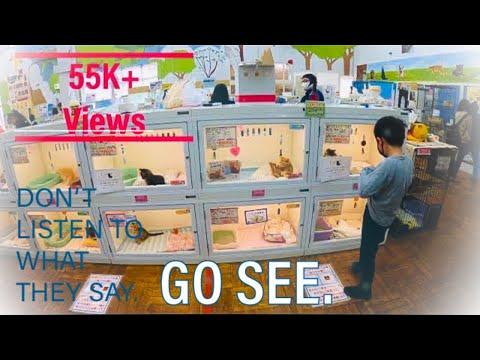 Joyful Honda 4K | Best pet store in Tokyo | Indian in Japan