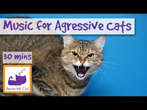 Music for Aggressive Cats, Music to Relax and Calm Cats with Aggression, Music for Grumpy Cat