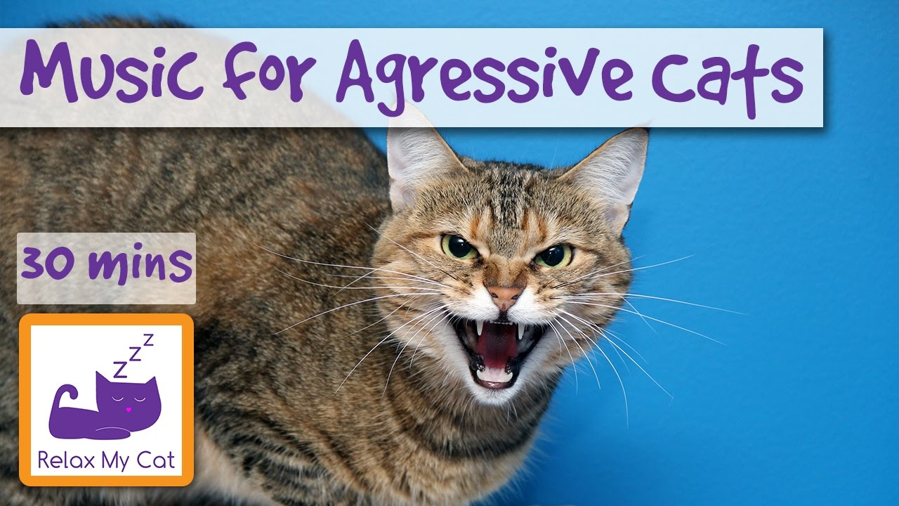 Music For Aggressive Cats Music To Relax And Calm Cats With Aggression Music For Grumpy Cat Youtube