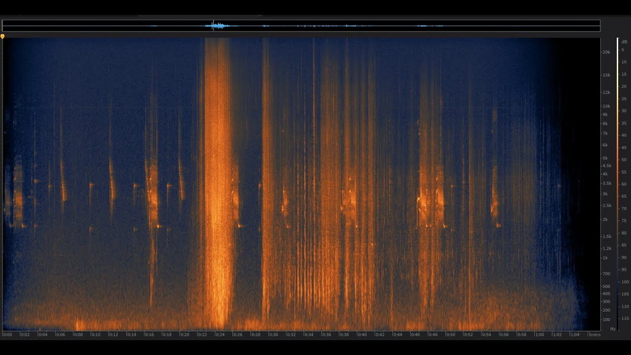 American Coot: Santa Cruz Mountains, California | Spectrogram Follow