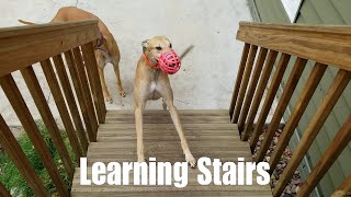 Learning Stairs [3.03]