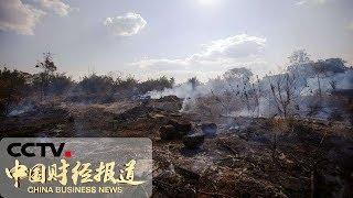 [中国财经报道]巴西:林火激增 过半发生在亚马孙雨林| CCTV财经
