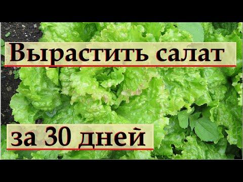 221_Как вырастить  САЛАТ за 30 дней.