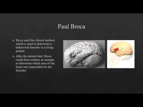 Franz Joseph Gall vs  Paul Broca: Brain Functions