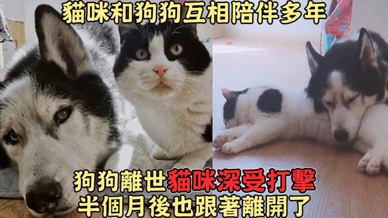 貓咪和狗狗互相陪伴多年,狗狗離世,貓咪深受打擊,半個月後也跟著離開了