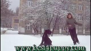Дрессировка и обучение щенка