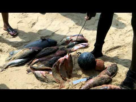Pêche au Harpon à Coco Beach - Lomé - Togo .mp4