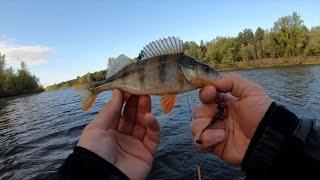 Подобрал приманку на Окуня Рыбалка на Микроджиг