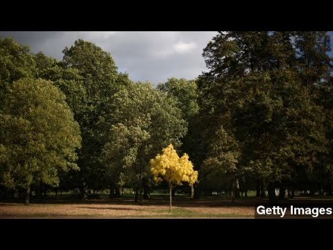Trees Could Save More Than 850 Lives Each Year
