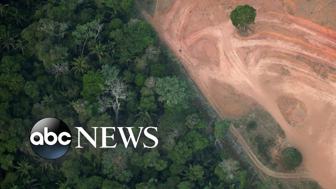 ABC News:Amazon deforestation, Hong Kong protests, zoo weigh-in: World in Photos, Aug. 22