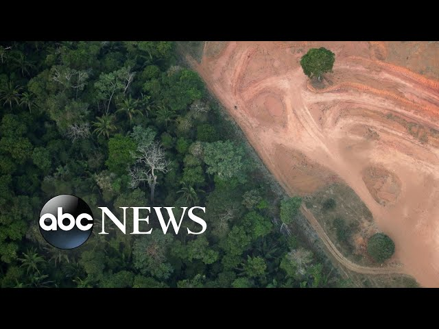 Amazon deforestation, Hong Kong protests, zoo weigh-in: World in Photos, Aug. 22