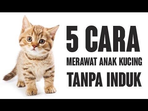 5 Cara Merawat Anak Kucing Tanpa Induk