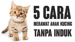 Gambar cover 5 Cara Merawat Anak Kucing Tanpa Induk