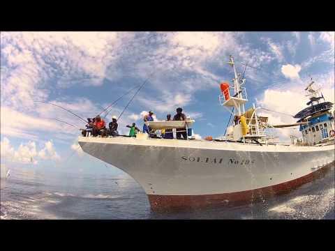 Tuna Tagging In Papua New Guinea