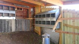 This is my Big Back Yard Chicken Coop. We are raising chickens to teach our children about animals and how to take care of them.