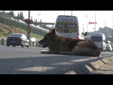 D 100'ün Ortasında Saatlerce Kurtarılmayı Bekleyen Köpek
