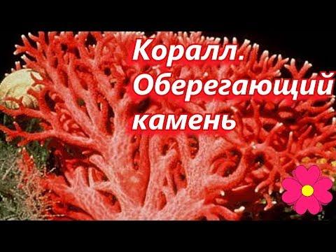 Коралл.  Оберегающий камень