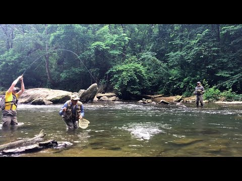 Fly fishing Southeastern Pennsylvania 2018 - Big rainbow trout landed