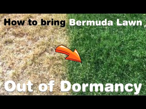 Breaking Dormancy, How to bring Bermuda Grass out of dormancy