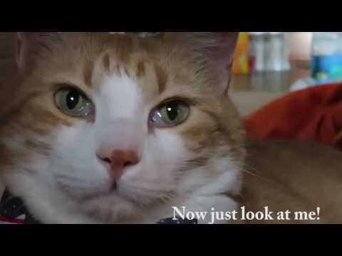 Cat News - Presidential Election 2016 | Vote!