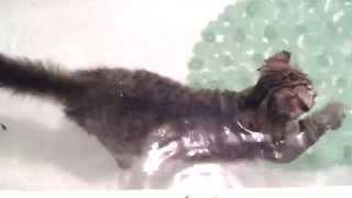 Забавные коты!Кот плавает!