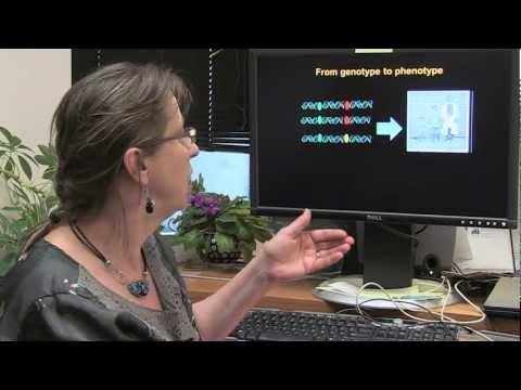 Computational Biology: From Genotype to Phenotype - Teresa Przytycka, NIH Scientist