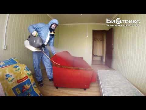 Если в квартире завелись клопы,клещи в мебели.Что делать?