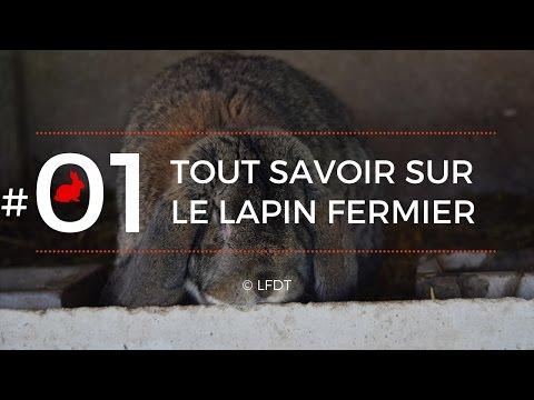 les lapins 1 tout savoir sur le lapin fermier youtube. Black Bedroom Furniture Sets. Home Design Ideas