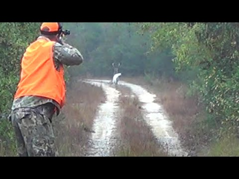 Public Land Deer Dog Hunt || Geneva State Forest 2019