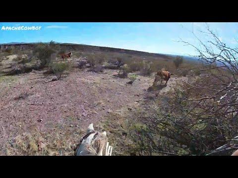 Dangerous Bull Hunt