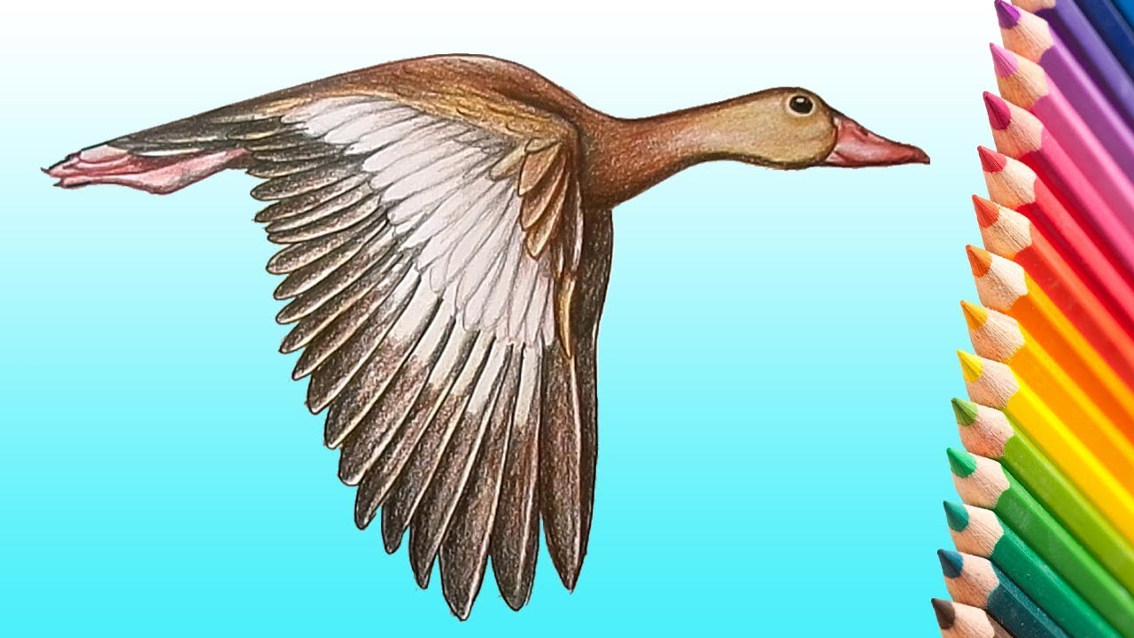 learn how to draw a realistic flying duck step by step how to draw birds
