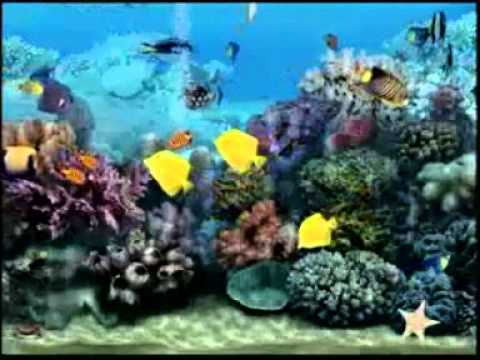 Fond d 39 cran pour t l vision aquarium test youtube for Fond ecran aquarium