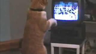 Spacy.Tv - Кот смотрит бокс по телевизору