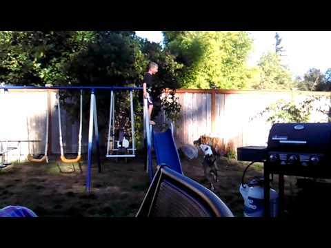 Sliding dog