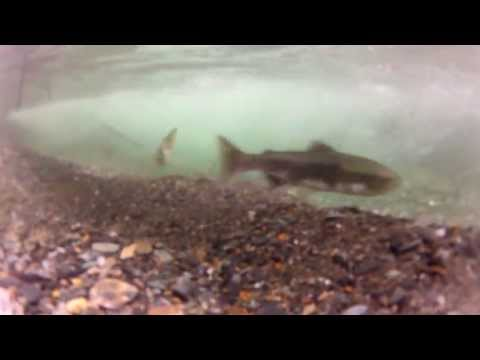 Fishing Around Juneau Alaska