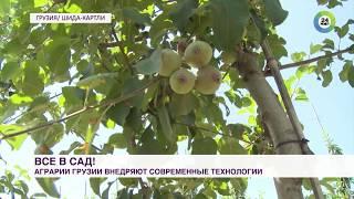 Все в сад: новые технологии аграриев Грузии