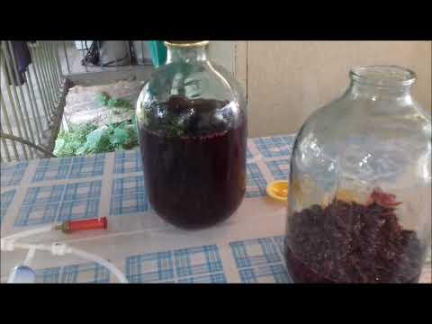 Настойка из изабеллы для дистилляции, полуфабрикат для виноградного самогона.