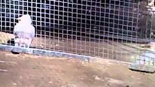 حديقة الحيوانات ببن عكنون ـ العاصمة ـ
