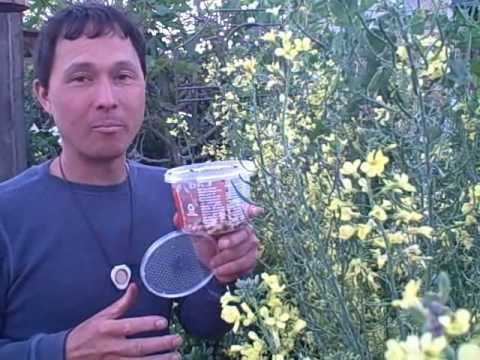 3 Tips to Ensure LadyBugs Stay in Your Garden after Release